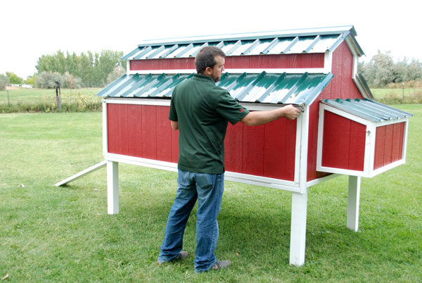 man and chicken coop