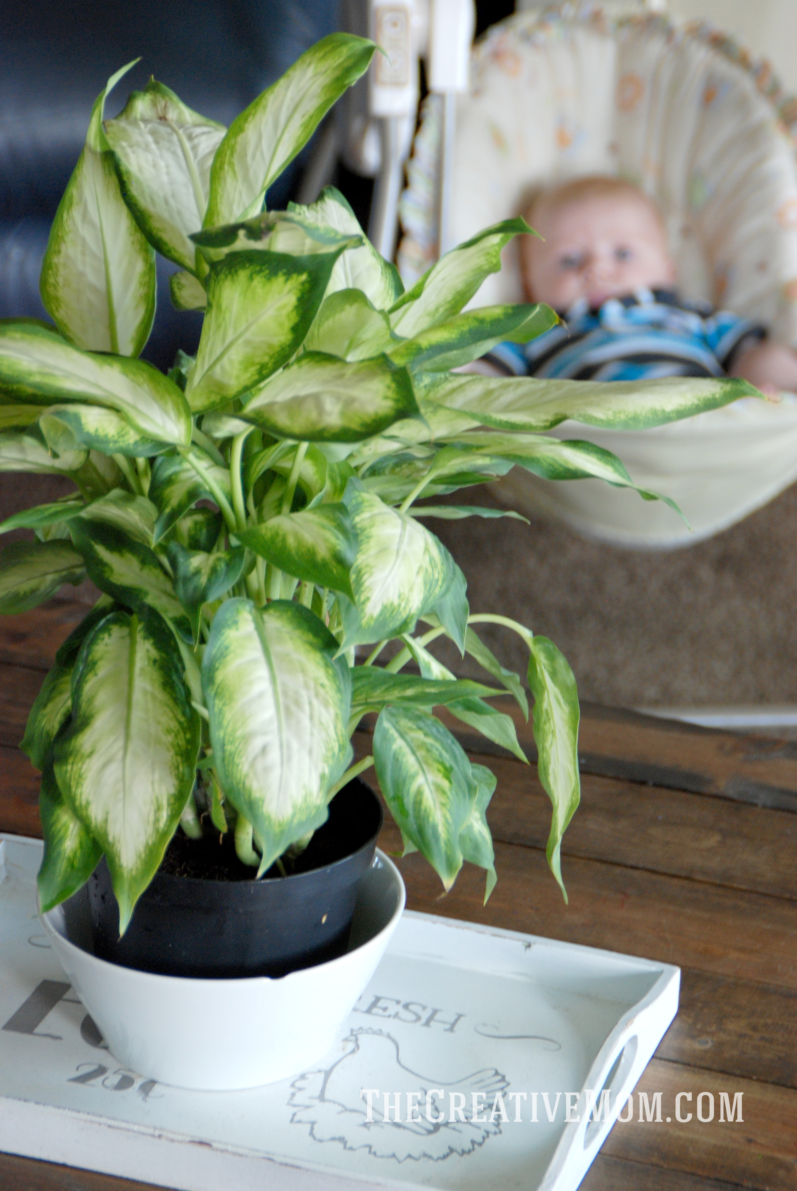 Air Purifying Plants For Bedroom: Air Purifying Plant
