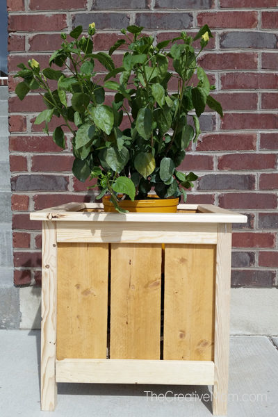 diy planter box outside with plant
