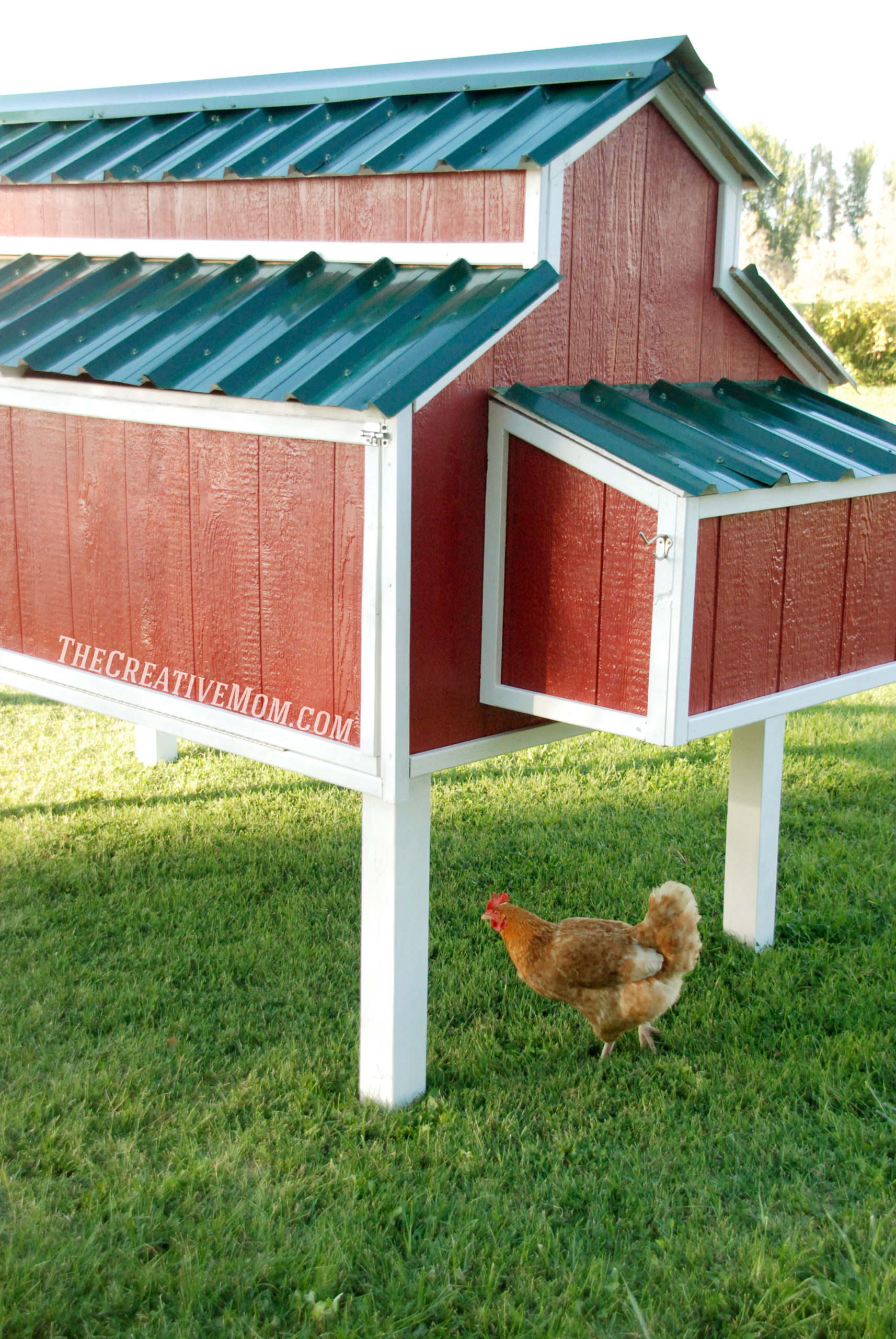 All About Raising Backyard Chickens